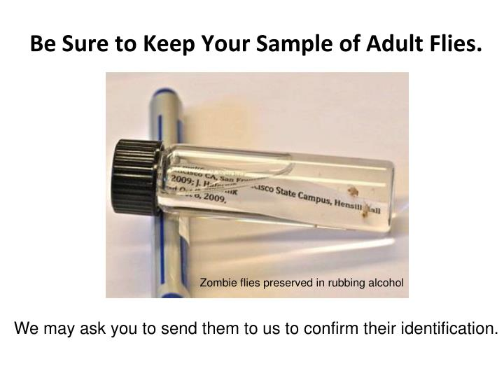 Be Sure to Keep Your Sample of Adult Flies.