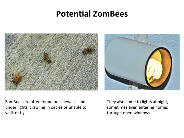 Potential ZomBees