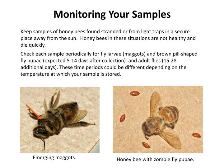 Monitoring Your Samples