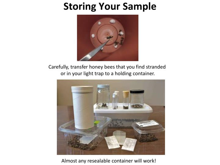 Storing Your Sample