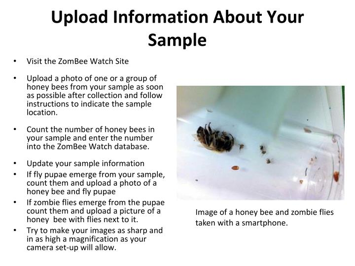 Upload Information About Your Sample
