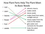 how plant parts help the plant meet its basic needs