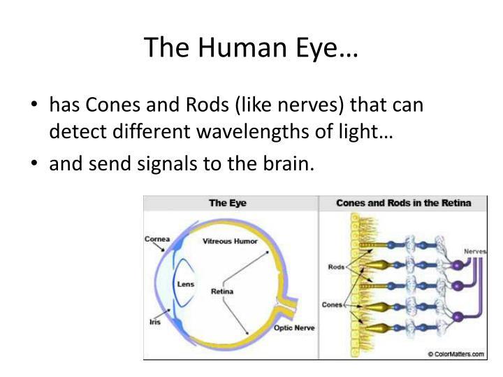 The Human Eye…
