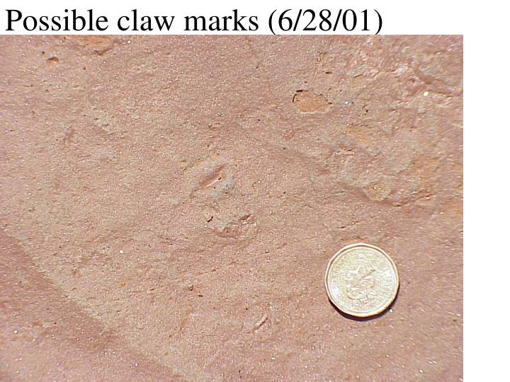 Possible claw marks (6/28/01)