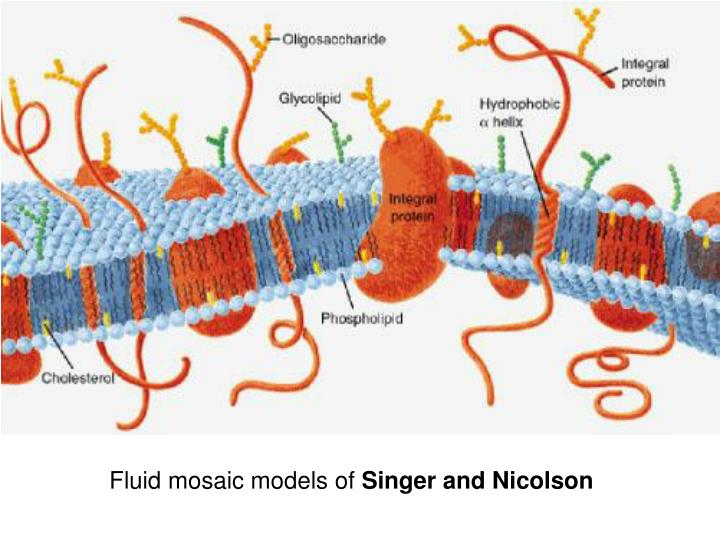 Fluid mosaic models of