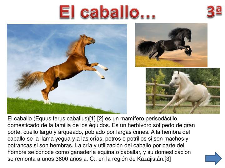 El caballo…