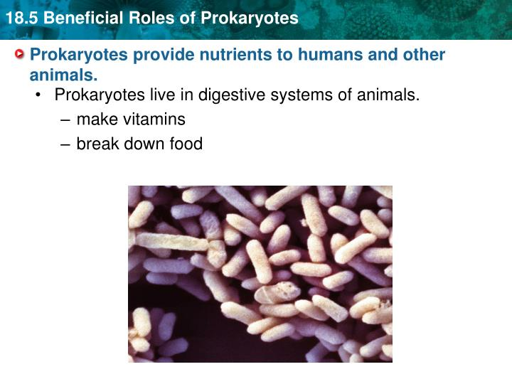Prokaryotes provide nutrients to humans and other animals.