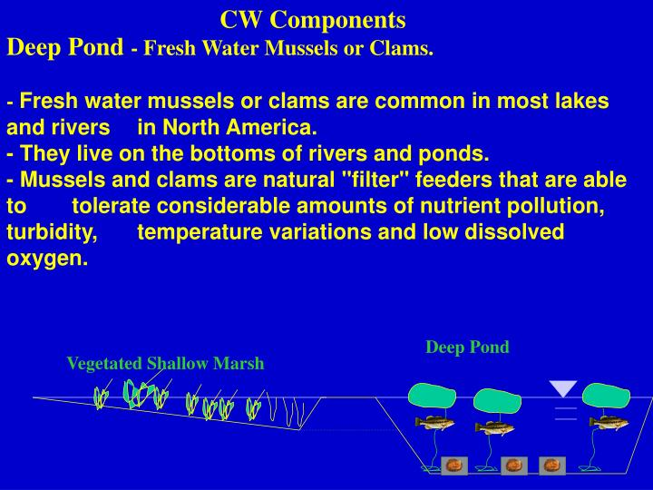 CW Components