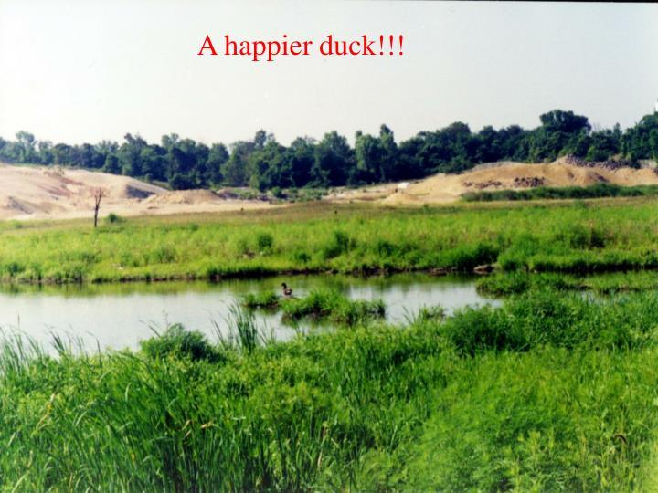A happier duck!!!