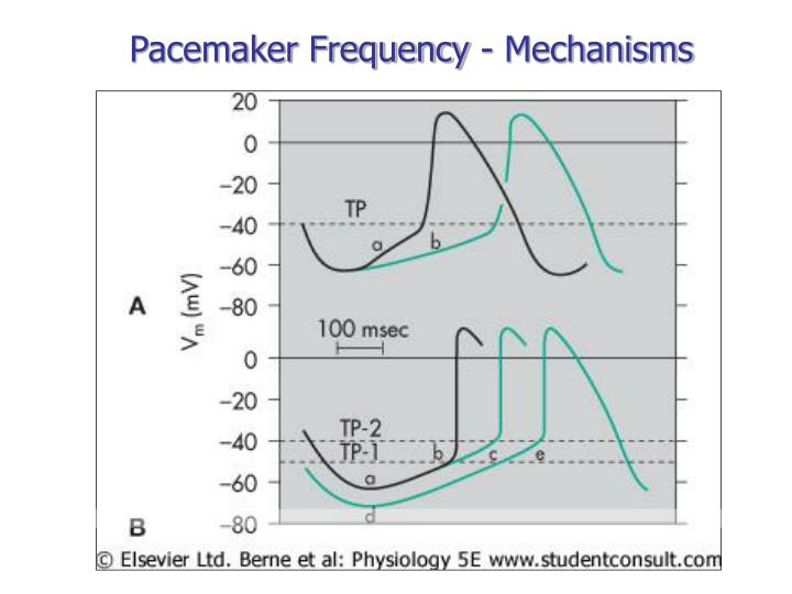 Pacemaker Frequency - Mechanisms