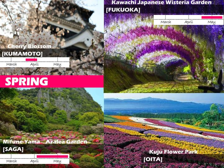 Kawachi Japanese Wisteria Garden