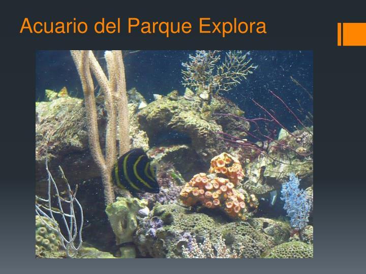Acuario del Parque Explora
