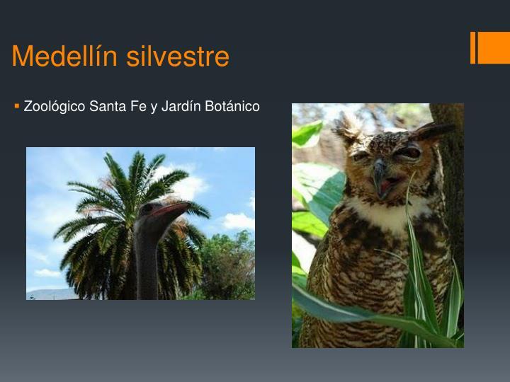 Medellín silvestre