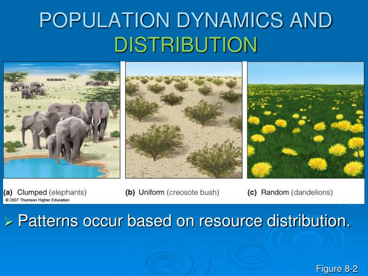 POPULATION DYNAMICS AND