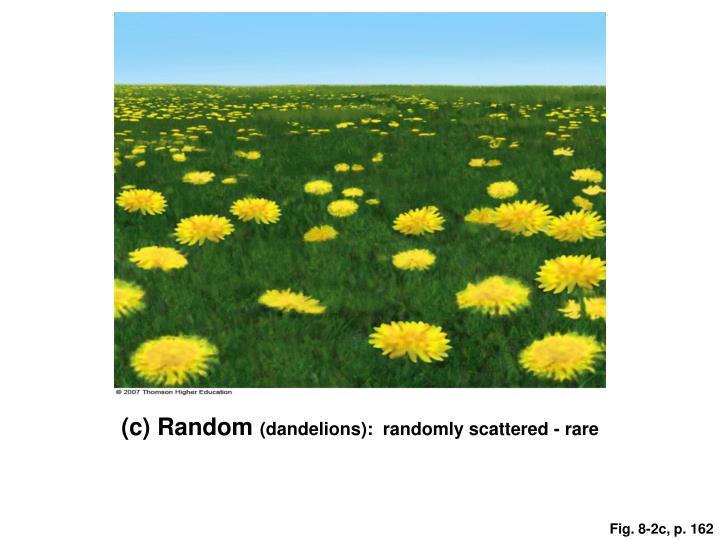 (c) Random