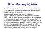 mol cules amphiphiles