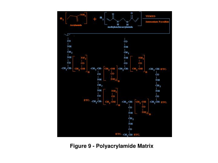 Figure 9 - Polyacrylamide Matrix