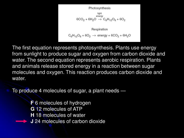 The first equation represents photosynthesis. Plants use energy from sunlight to produce sugar and oxygen from carbon dioxide and water. The second equation represents aerobic respiration. Plants and animals release stored energy in a reaction between sugar molecules and oxygen. This reaction produces carbon dioxide and water.