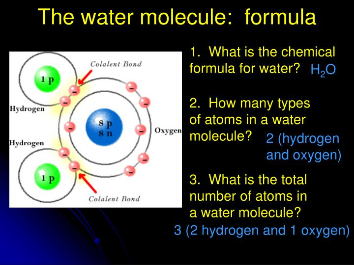 The water molecule:  formula
