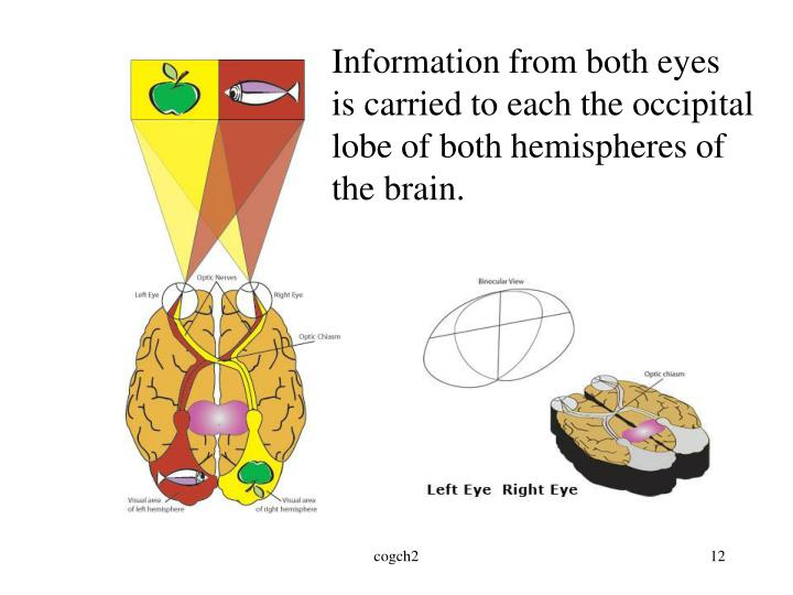 Information from both eyes
