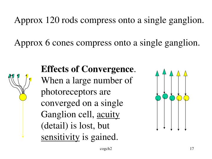 Approx 120 rods compress onto a single ganglion.