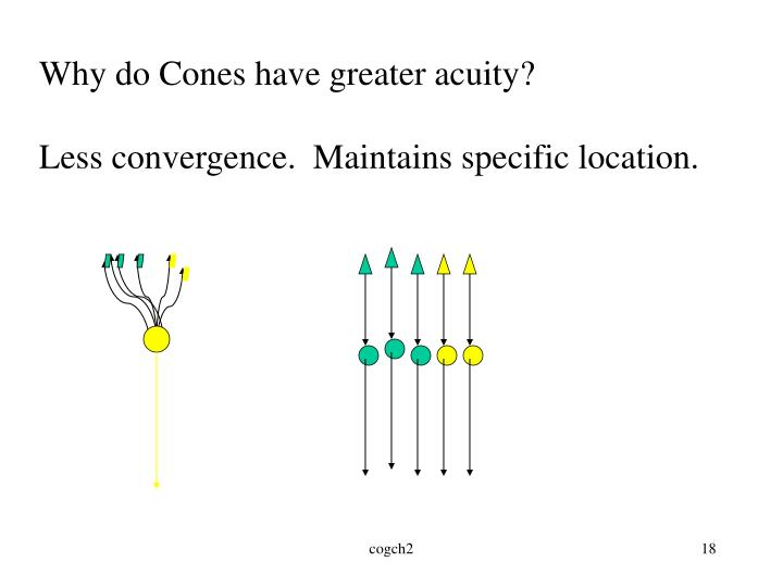 Why do Cones have greater acuity?