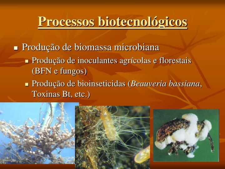 Processos biotecnológicos