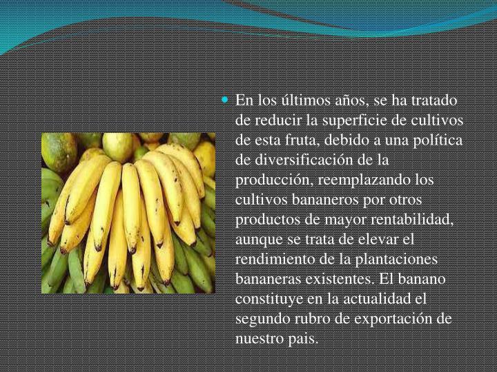 En los últimos años, se ha tratado de reducir la superficie de cultivos de esta fruta, debido a una política de diversificación de la producción, reemplazando los cultivos bananeros por otros productos de mayor rentabilidad, aunque se trata de elevar el rendimiento de la plantaciones bananeras existentes. El banano constituye en la actualidad el segundo rubro de exportación de nuestro