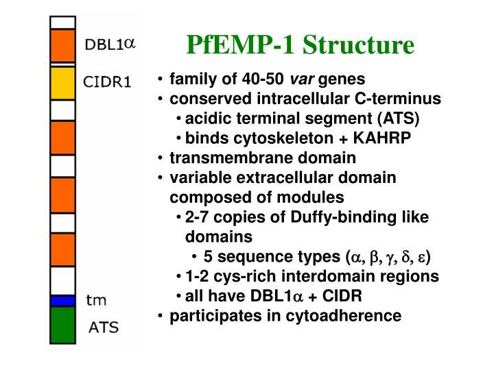 PfEMP-1 Structure