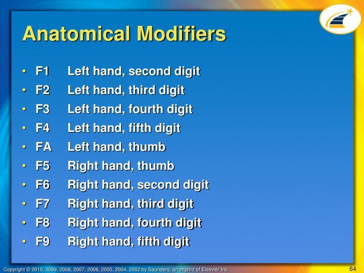 Anatomical Modifiers