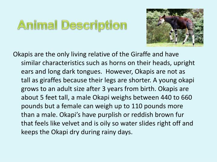 Animal Description