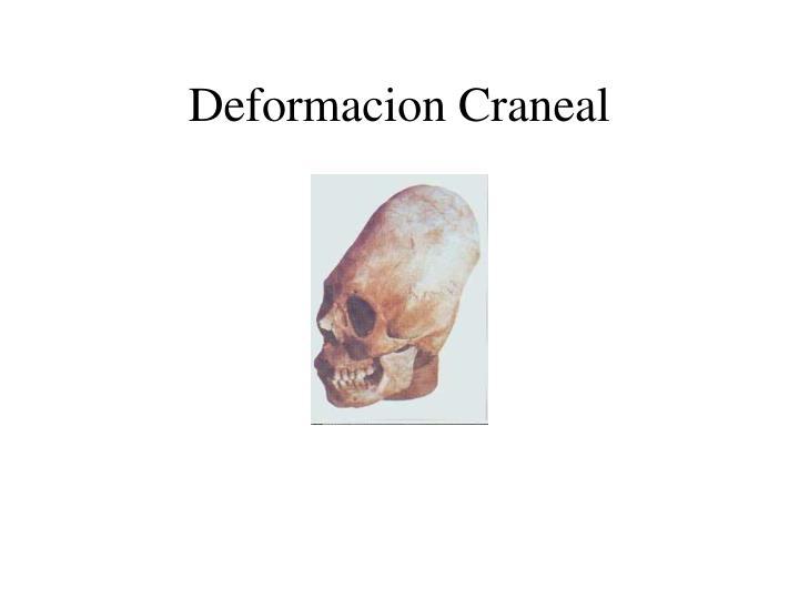 Deformacion Craneal