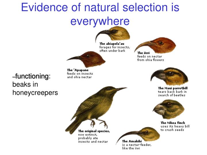 Component Of The Theory Of Evolution By Natural Selection