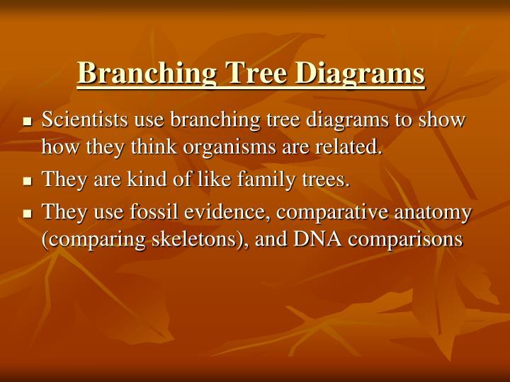 Branching Tree Diagrams