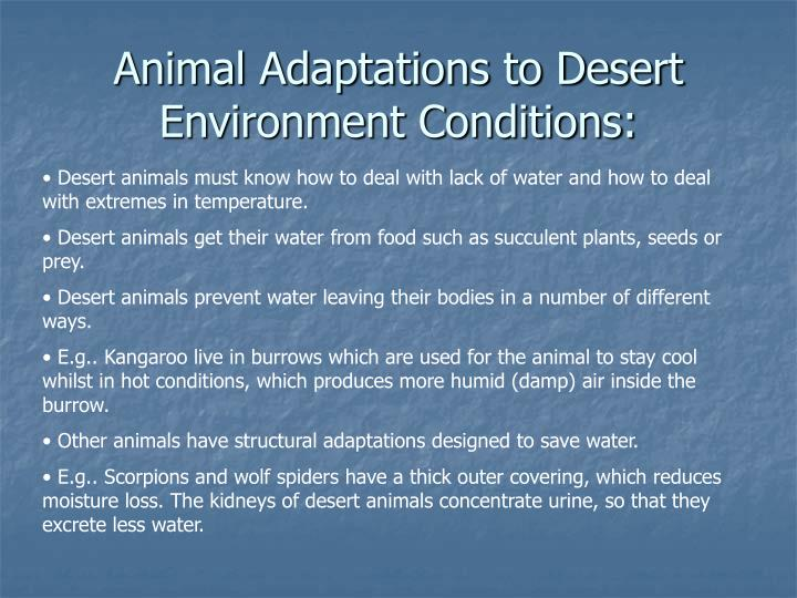 Animal Adaptations to Desert Environment Conditions: