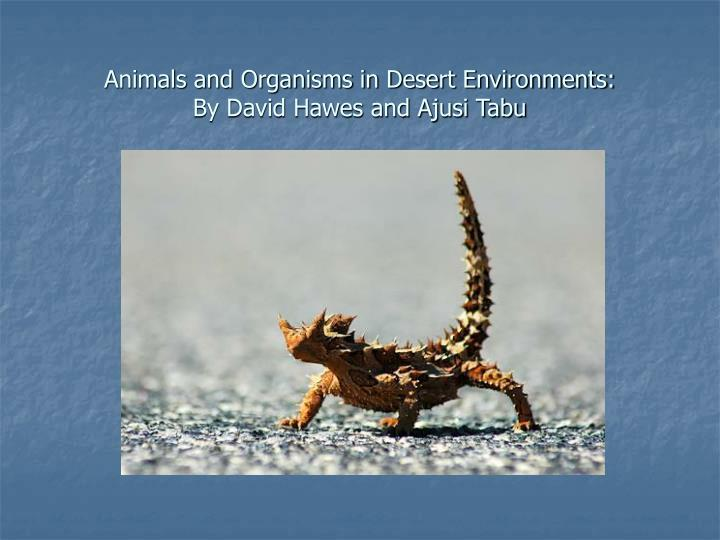 Animals and organisms in desert environments by david hawes and ajusi tabu