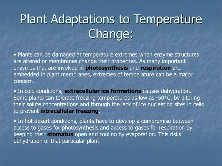 Plant Adaptations to Temperature Change: