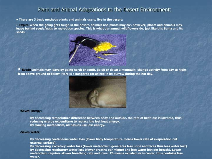 Plant and Animal Adaptations to the Desert Environment: