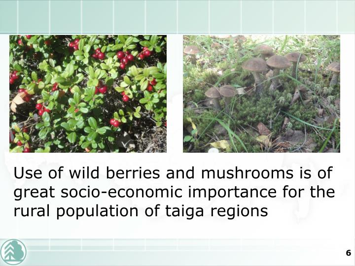 Use of wild berries and mushrooms is of great socio-economic importance for the rural population of taiga regions