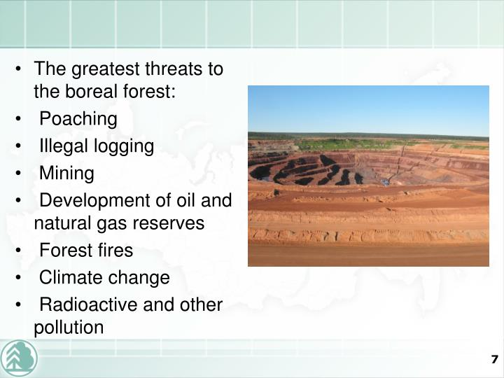 The greatest threats to the boreal forest: