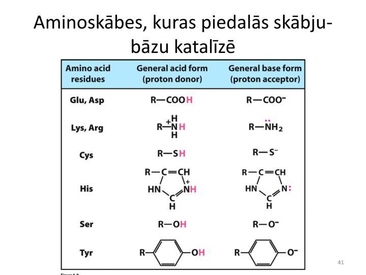 Aminoskābes, kuras piedalās skābju-bāzu katalīzē