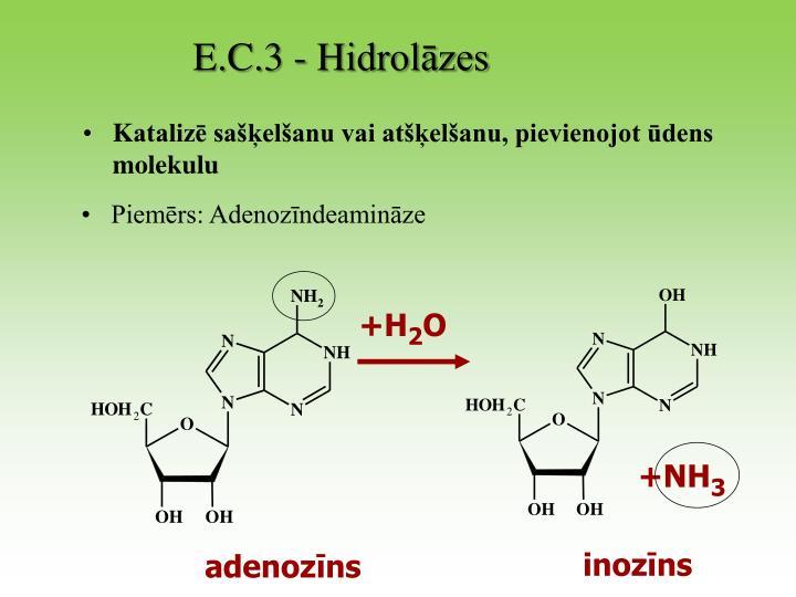 E.C.3