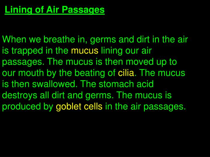 Lining of Air Passages
