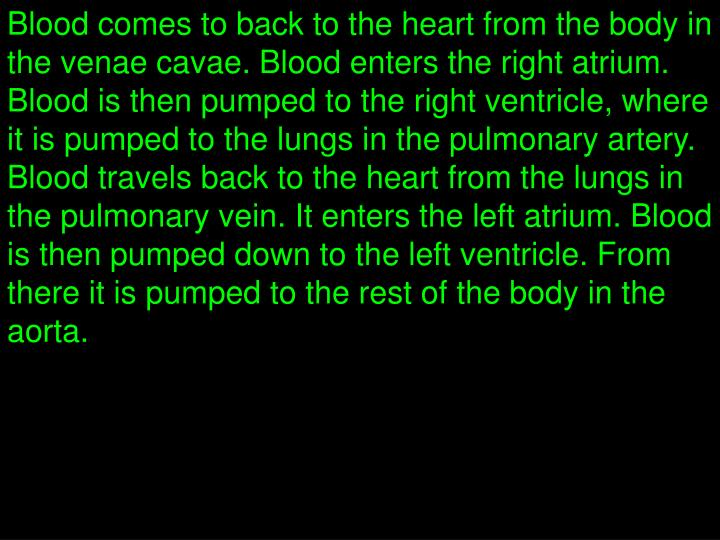 Blood comes to back to the heart from the body in the venae cavae. Blood enters the right atrium. Blood is then pumped to the right ventricle, where it is pumped to the lungs in the pulmonary artery.