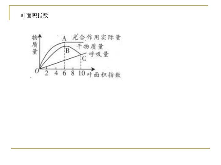 叶面积指数