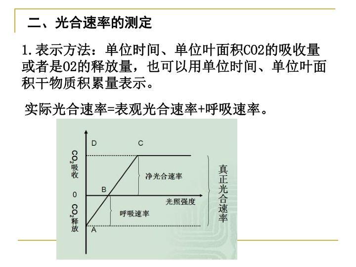 二、光合速率的测定