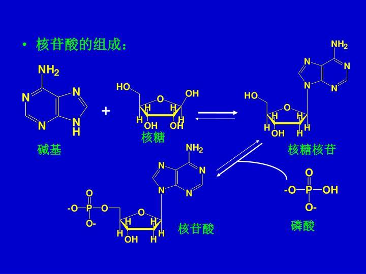 核苷酸的组成: