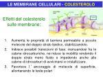 effetti del colesterolo sulle membrane