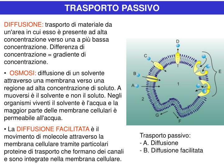 TRASPORTO PASSIVO