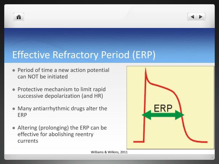 Effective Refractory Period (ERP)